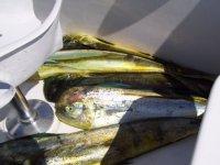 Peces pescados