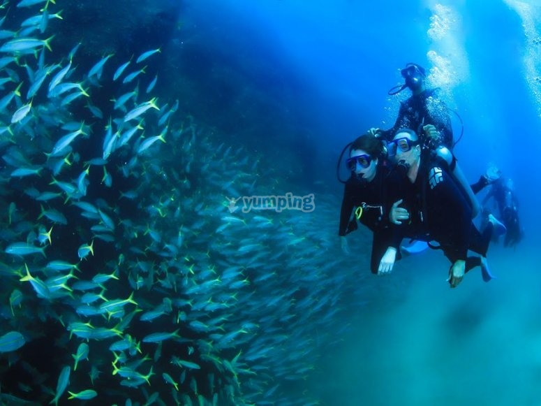 Diving in cape
