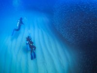 Diving dives in Cabo Pulmo
