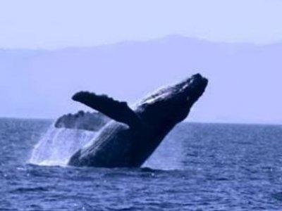 Charly´s Sailing & Sportfishing Whale Watching