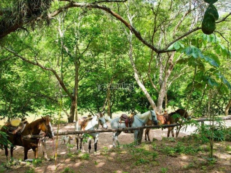 Preciosos caballos en Vallarta