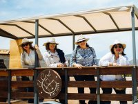 Wine route in Valle de Guadalupe with transportation