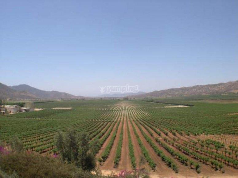 Views towards fields in Valle de Guadalupe