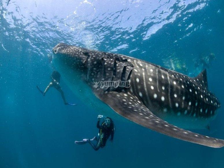Explorando bajo el mar