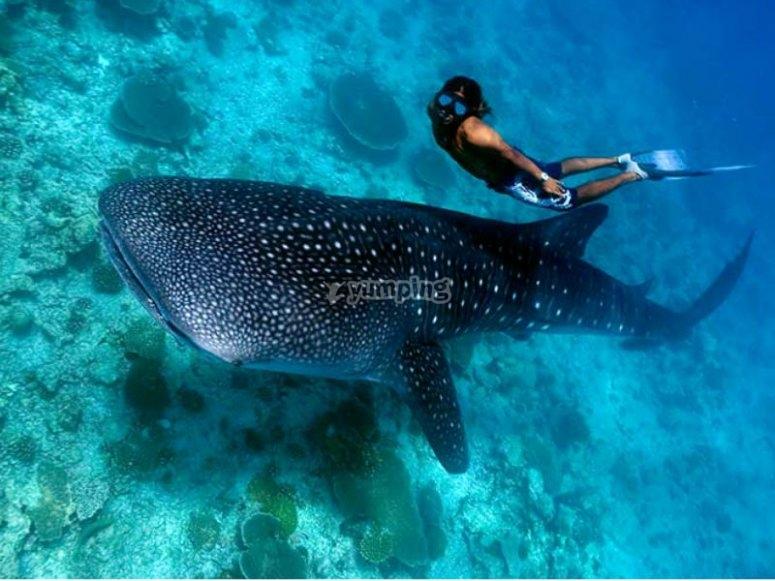 Snorkel y vida marina