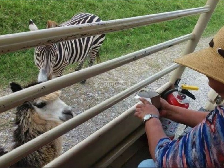 Incredible experience with animals