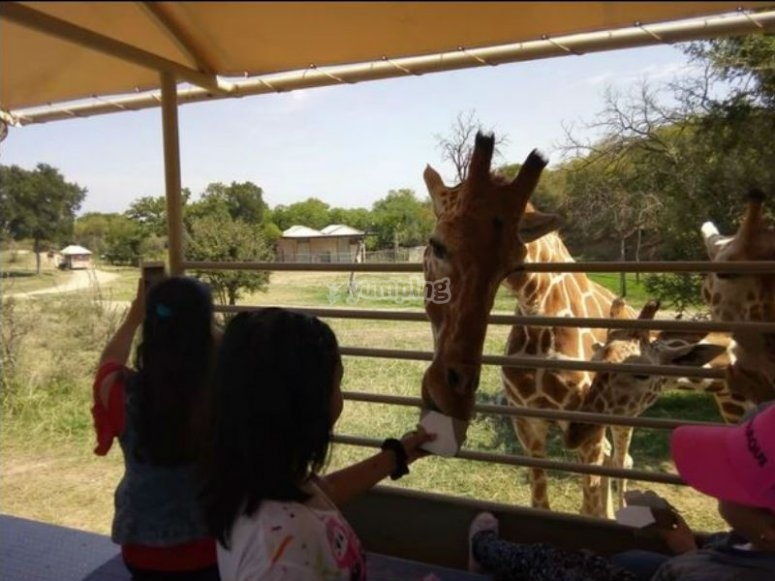 Safari in Monterrey
