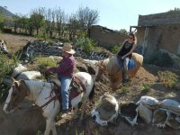 Enjoy a horse ride around Cholula