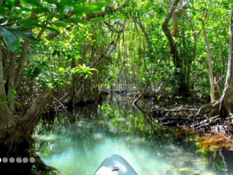 Discovering the landscapes of the mangroves