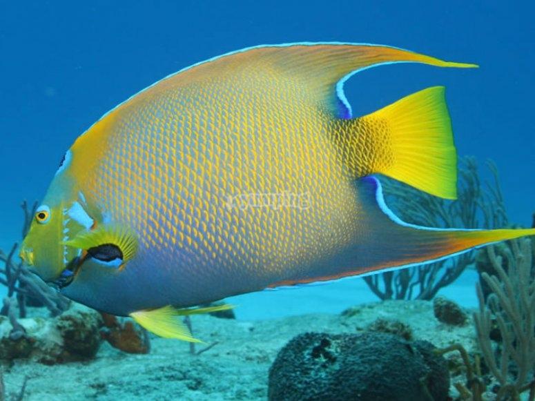 Bellezas submarinas en las aguas del caribe