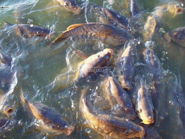 Ven a pescar en Rancho Escondido Casa Goyri