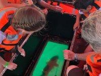 Barco con fondo de cristal para ver la fauna marina