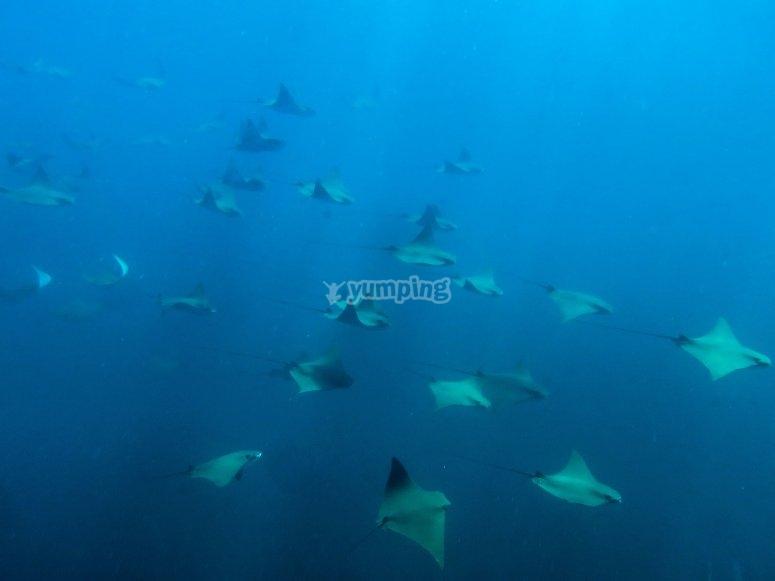 Nadando con matarrayas