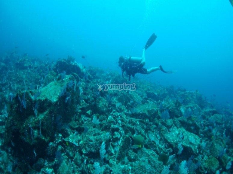 Descubriendo arrecifes