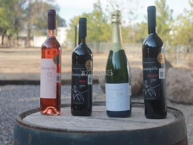 Vineyards in Querétaro