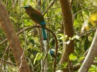 Avistamiento de Aves en Riviera Maya 6 h
