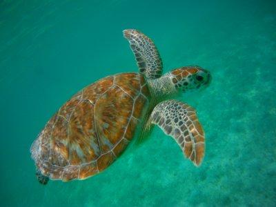 Snorkel con tortugas marinas en Cancún 5 horas