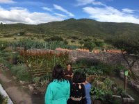 Tour of the organic ranch