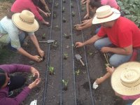 Cultivation workshops