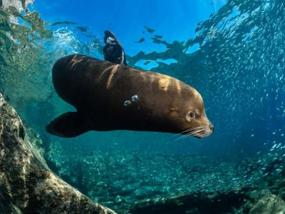 Diving with 2 dives in La Paz 6 hours