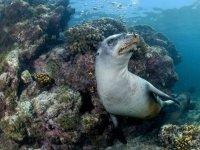 Descubre un mundo nuevo en el fondo del mar
