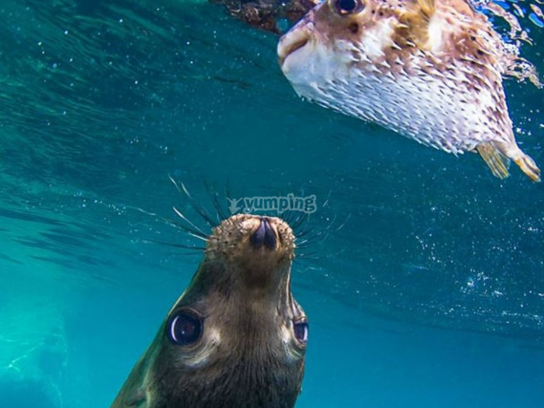 Vida marina en la Isla Espíritu Santo