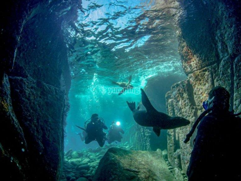Ven a descubrir el mundo submarino de La Paz
