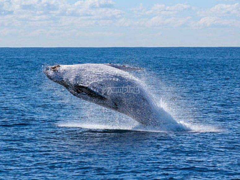 Ven a contemplar las ballenas jorobadas en el Pacífico Mexicano