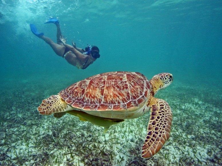 Nadando con grandes tortugas