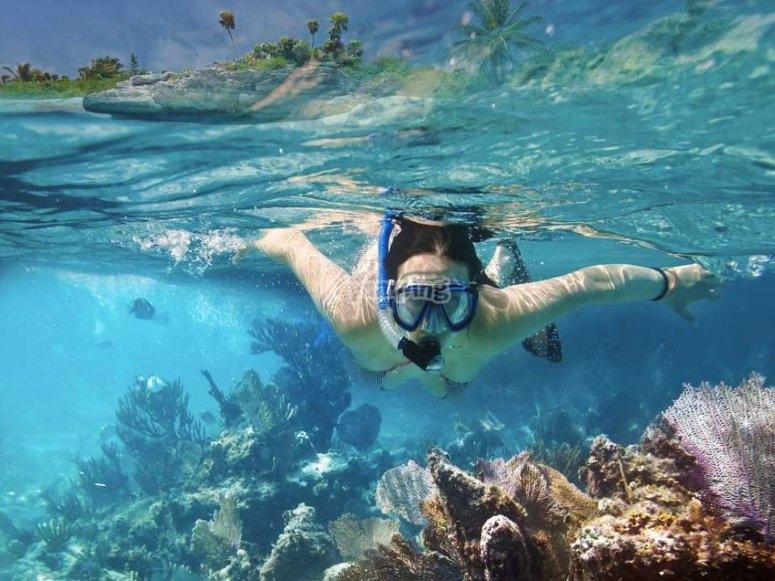 Nadando con animales marinos