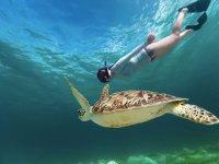 Snorkel en el caribe con tortugas