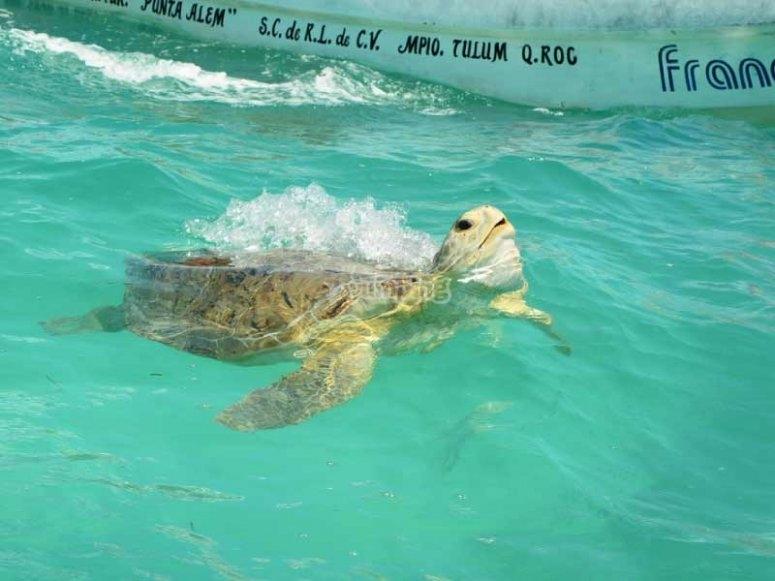 Beautiful sea turtles