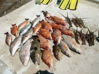 Fishing results