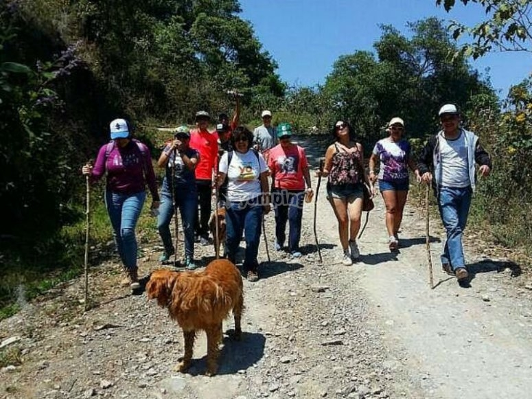 Walk with the family