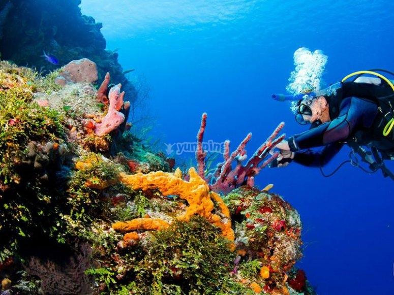 Buceando en el Caribe mexicano