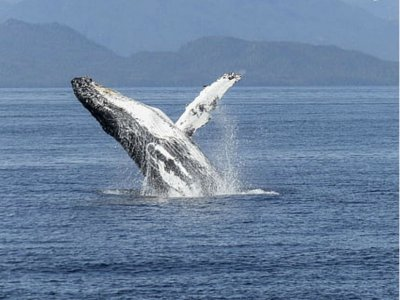 Whale Watching with food in Los Cabos 2.5h