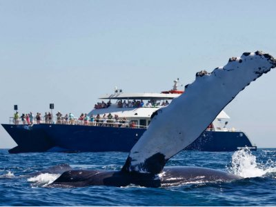 Whale watching for children Los Cabos 2.5 h