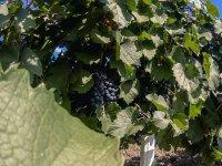 Disfruta de la visita por los viñedos