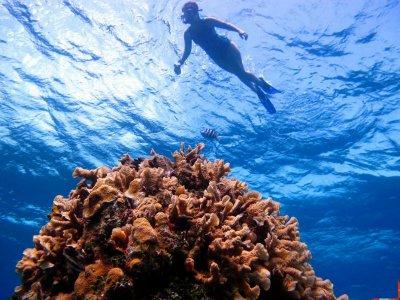 Snorkel in 2 reefs in Cozumel with drinks 4hrs