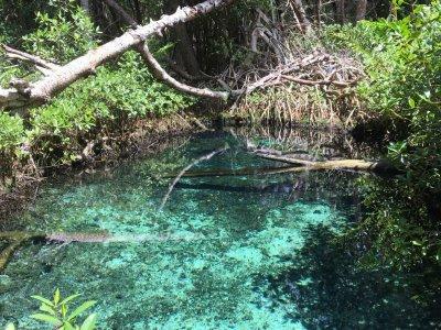 Petenes Biosphere Reserve Tour 3.5 hrs