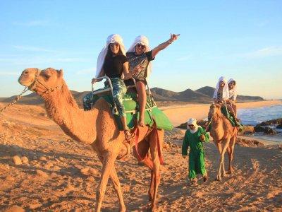 Paseo en camello por desierto en Cabo San Lucas 2h