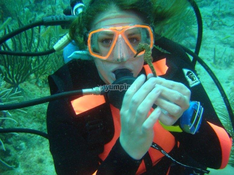 Aprende nuevas destrezas mientras admiras la vida marina de Paamul