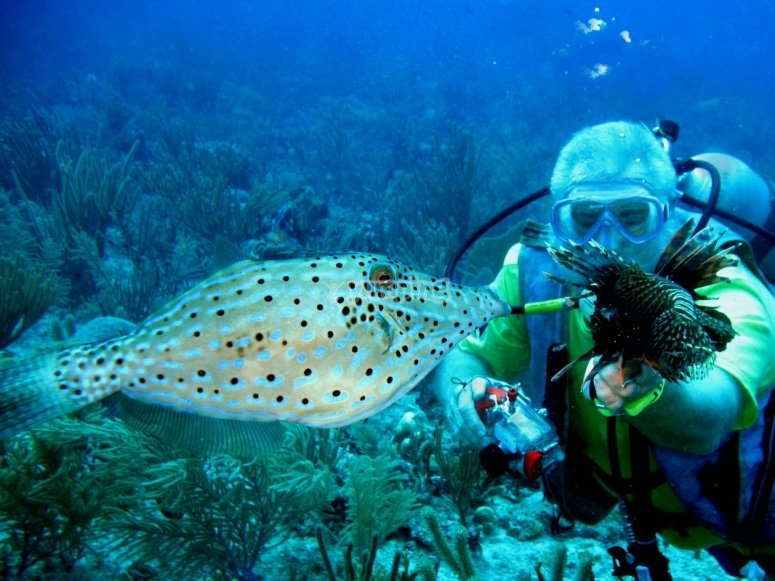 Descubre las maravillas del arrecife de Paamul
