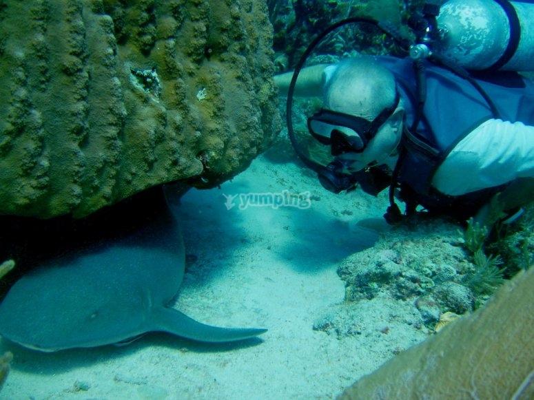 Te esperan sorpresas bajo el agua