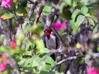 Birdwatching in Solferino from Holbox 5h