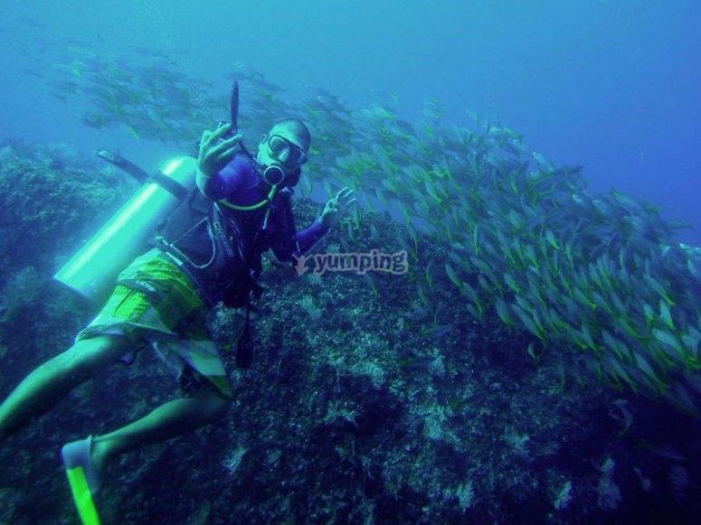 Discover the wonderful marine life of Acapulco