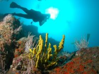 Beginners Scuba Diving Tour in Acapulco Bay 1 h