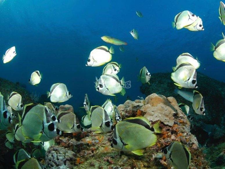 Descubre diferentes tipos de peces