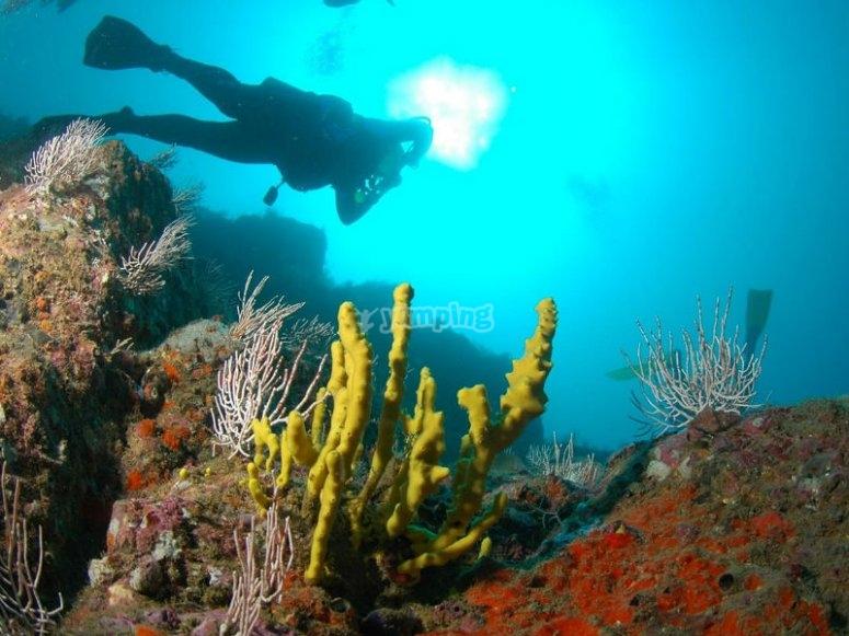 Contempla los hermosos paisajes subacuáticos