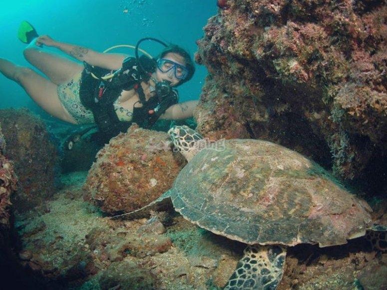 Parte de la vida marina de Acapulco son las tortugas
